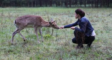 Rozmowy ze zwierzętami