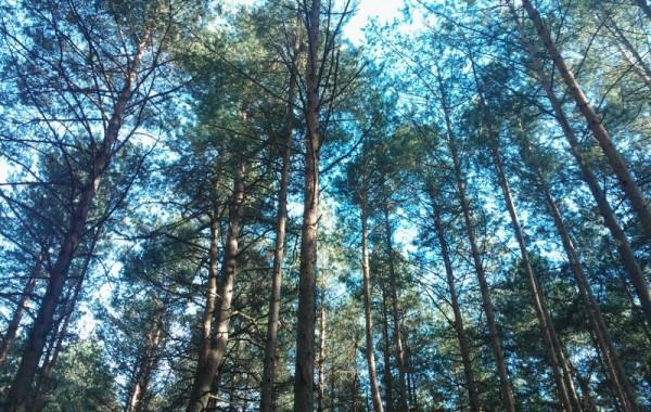 Zagruszański las wiosną