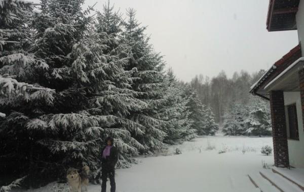Zimą jest tu jak w mitycznej krainie Narnia